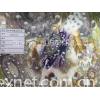 氨纶纬编麂皮绒印花