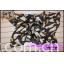 数码印花围巾