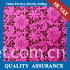 D0914 China factory YAXL-E1587 cord lacefabric,new design cord fabric lace,fashion cord lace fabric